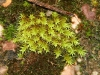 A variety of mosses