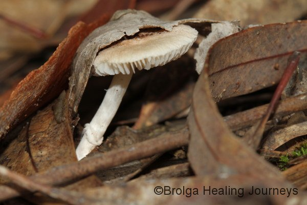 Pushing its way up through the leaf-litter