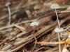 Tiny, delicate fungi emerge