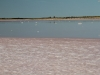 Lake Swanson, the pink colouration due to beta carotene