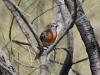 Flame Robin