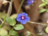 Tiny flower - possibly a weed, but still pretty