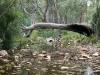Mambray Creek near campsite