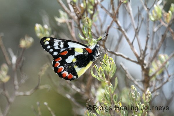 Butterfly at Surfleet Cove