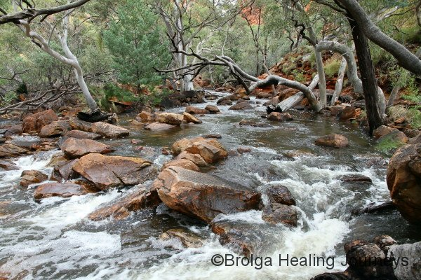 Kings Creek in flow along the base of Kings Canyon