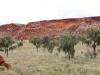 Desert Oaks at Rainbow Valley