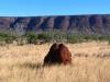 Mornington Wilderness Conservancy.  Termite mound.