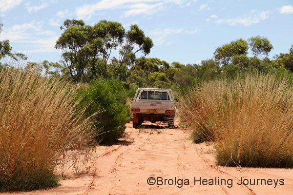 One of Scotia's utes among the spinifex