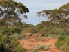 A track through the Mallee