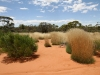Beautiful spinifex