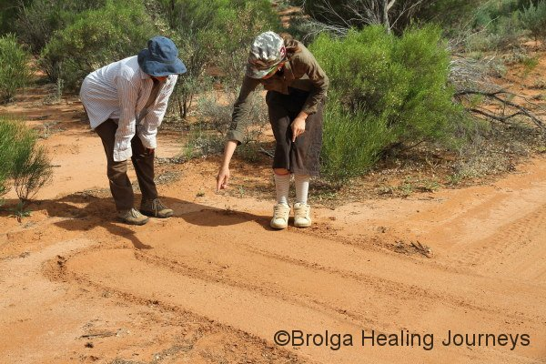 Joanne ('Lil Jo) shows Nirbeeja the finer points of 'dusting', a technique for monitoring feral animals