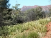 Another view of the West MacDonnell Ranges, from walk to Rocky Gap