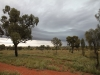 En route to Watarrka.  Storm clouds gather behind the Desert Oaks