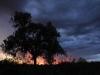 Desert Oak sunset at Kings Creek Station
