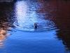 Nirbeeja swims in 'the' Desert Queen Bath
