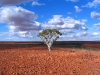 'One Tree Hill' near Coolbro Creek, eastern Pilbara