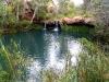 Fern Pool, Karijini Ntl Pk