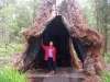 Nirbeeja stands in the base of a Red Tingle Tree.  The base hollows as the tree ages.