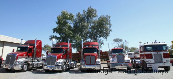 A serious Kenworth line-up