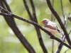 Another male Zebra Finch. Okay, I am obsessed with these, but aren't they gorgeous!?