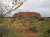 Honey Grevillea and Uluru