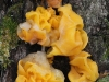 Another Jelly fungus, I think, though I could be wrong.  Possibly Tremella mesenterica.