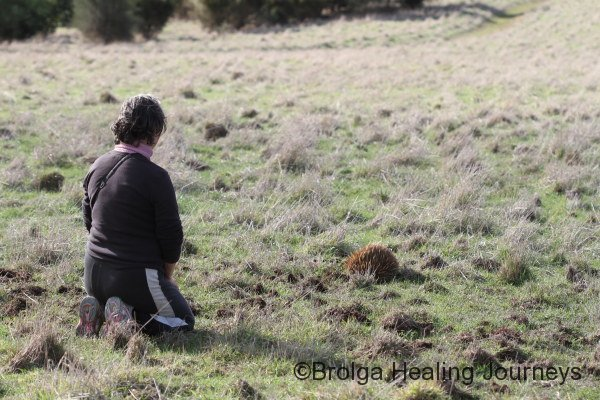 Nirbeeja communes with a local Echidna