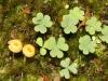 Tiny fungi in moss