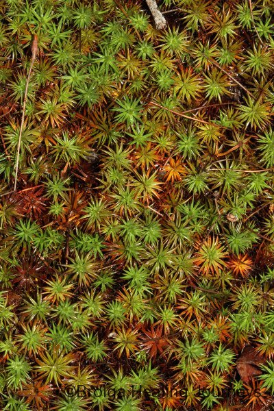 Close-up of moss.