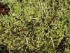 Close-up of lichen.