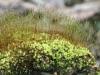 Moss and spores