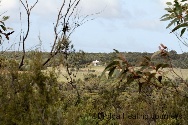The view to the studio from the heritage bushland.