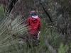 Nirbeeja heads into the bush to explore