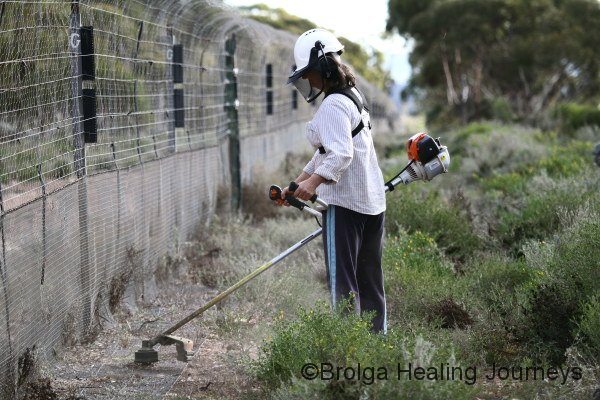 Nirbeeja hard at work clearing vegetation from outside the feral-free fence.