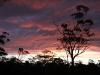 Yookamurra sunset.